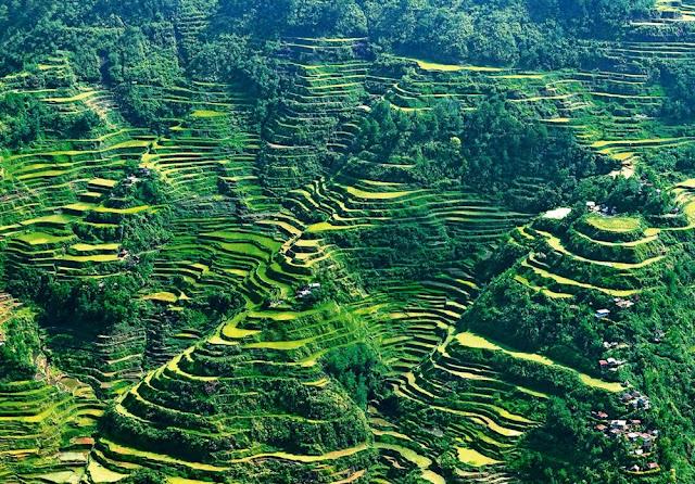 建築模型のコンタよりコンタな地形?世界にある美しい棚田3つ コルディリェ-ラの棚田  フィリピン