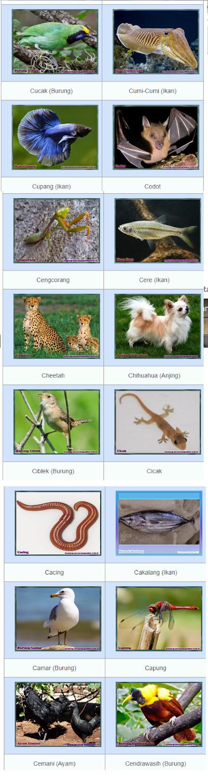 Nama Hewan Dari A Sampai Z : hewan, sampai, Daftar, Hewan, Dimulai, Huruf, Lengkap, Dengan, Gambarnya, DAFTAR, HEWAN, LENGKAP