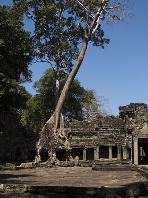 Tree growing from Preah Khan temple in Cambodia