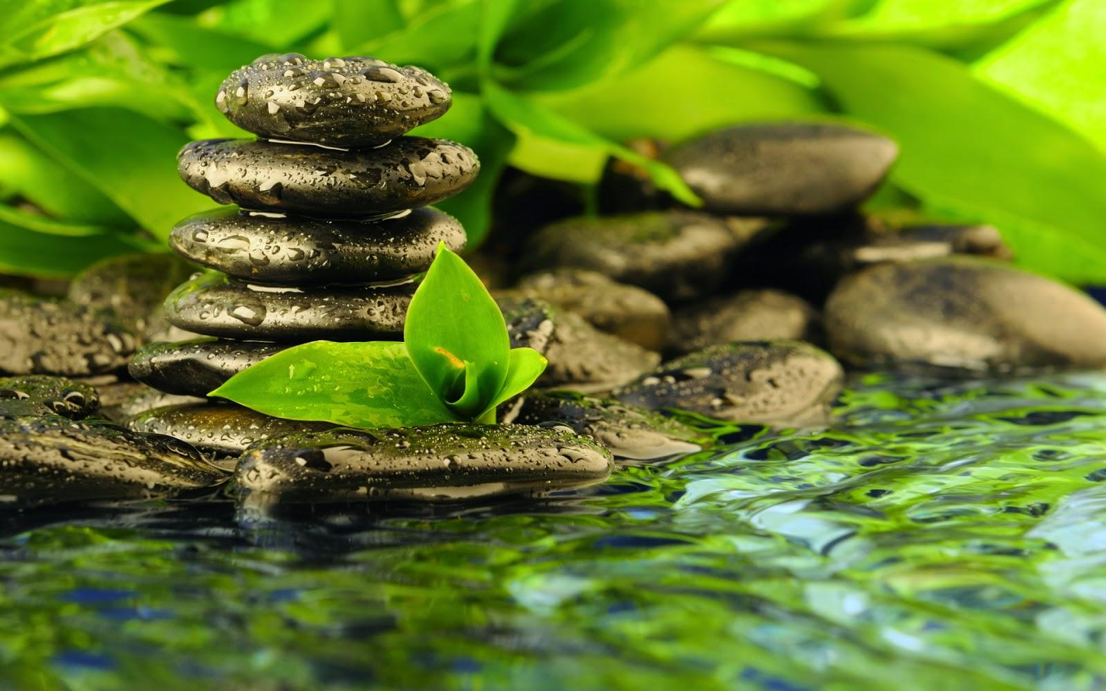 Zen Relaxation Backgrounds: August 2014