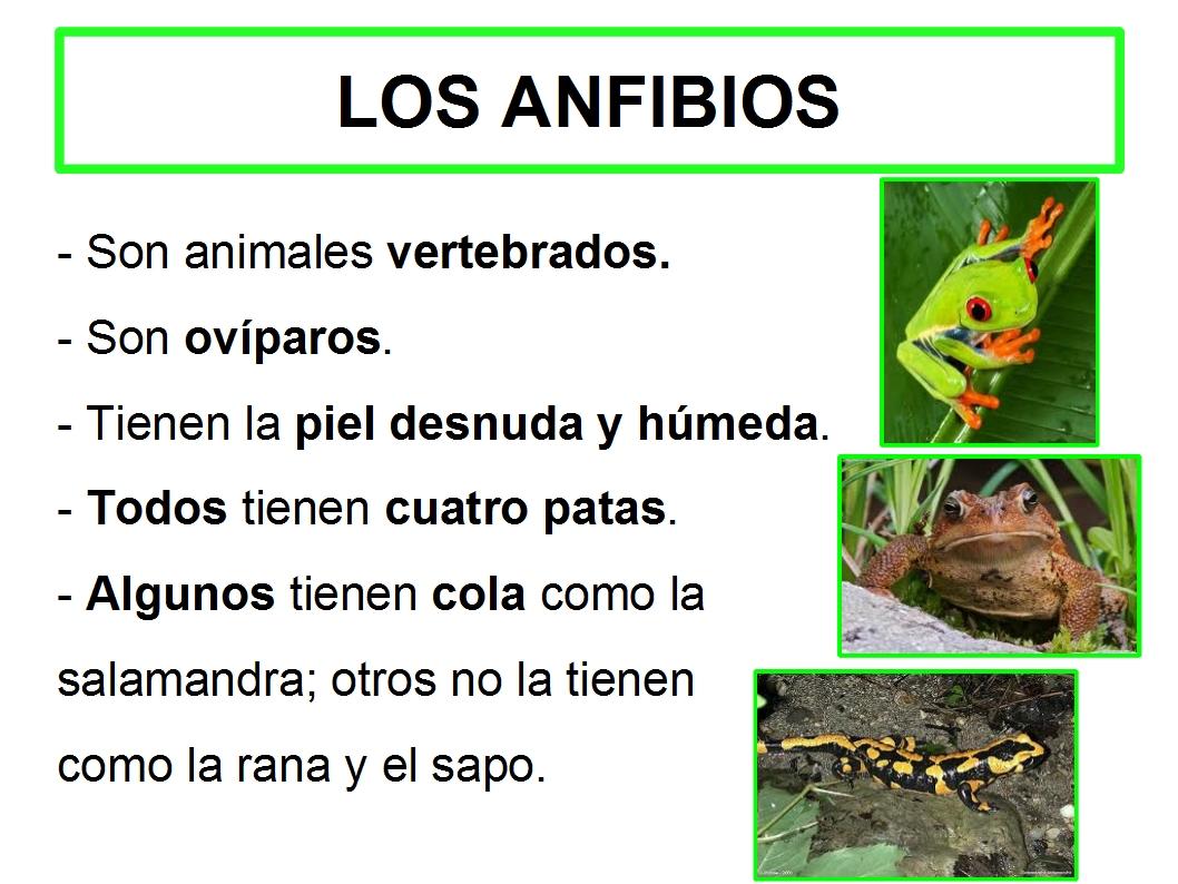 LAPICERO DE TERCERO : animales VERTEBRADOS