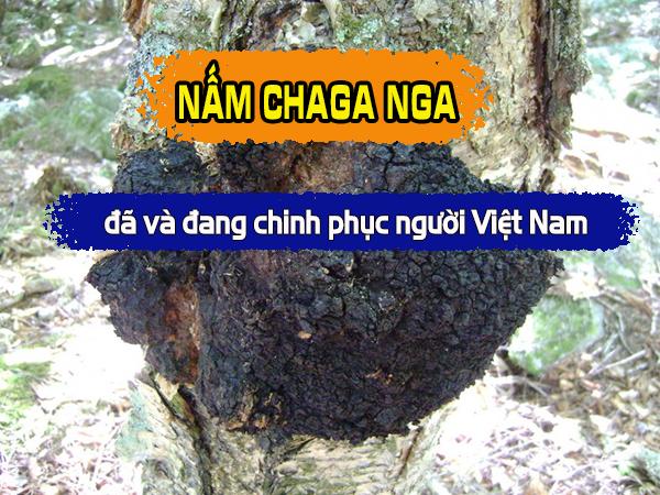 Nấm Chaga Nga đã và đang chinh phục người Việt Nam