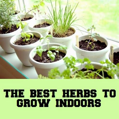 Best herbs to grow indoors container gardening 101 - Best herbs to grow indoors ...