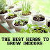 Best Herbs to Grow Indoors #Container_gardening
