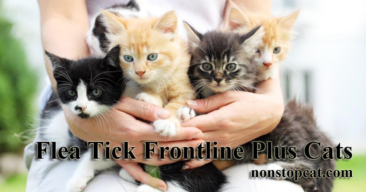 Flea Tick Frontline Plus Cats