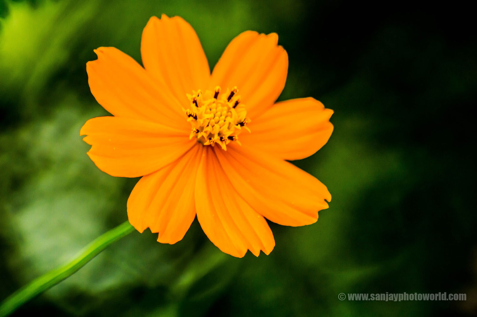 HD Beautiful Flowers Wallpapers - StudioPk
