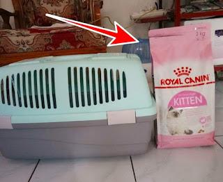 makanan kucing merek royal canin kitten