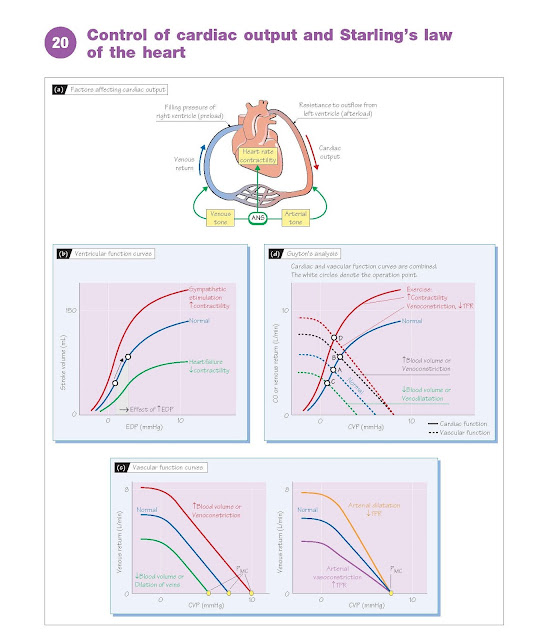 Control Of Cardiac Output And Starling's Law Of The Heart