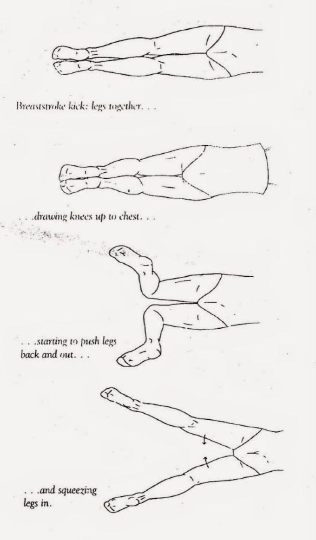 Gerakan Kaki Renang Gaya Punggung Dimulai Dari : gerakan, renang, punggung, dimulai, RENANG, PUNGGUNG