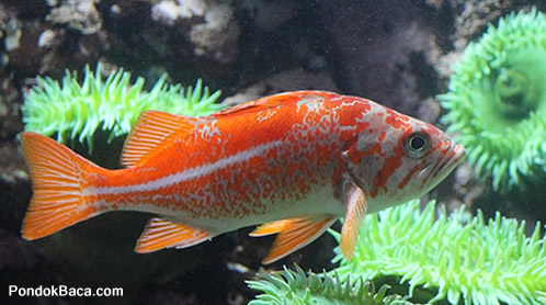 Cerita Hewan/Fabel Kisah Ikan dan Air