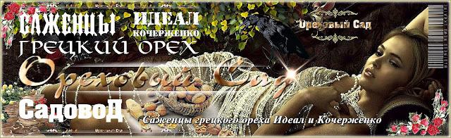Саженцы грецкого ореха идеал и кочерженко в Украине, 0961595554, 0500548724, Садовод
