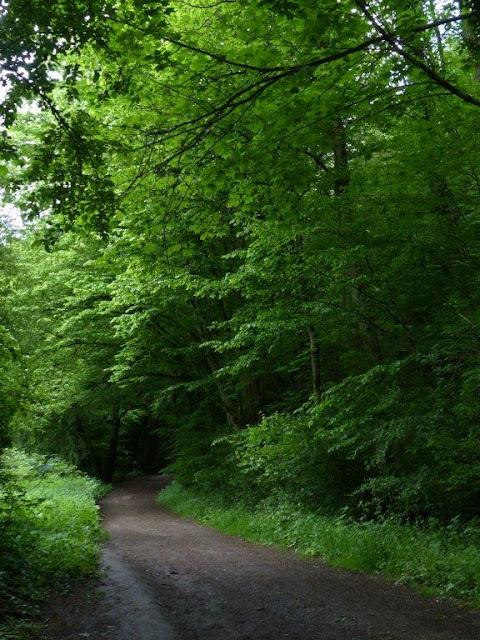 Wanderung Rundweg Bochum Ruhrgebiet Kopf frei bekommen Schritt für Schritt Wald Natur Depression Reizarm Entschleunigung Achtsamkeit Auszeit Sternwarte
