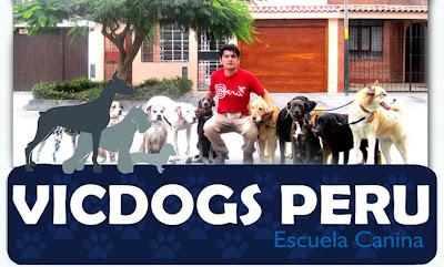 Adiestramiento Canino - Vicdogs Perú