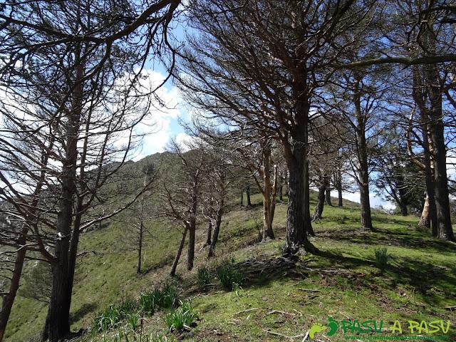 Árboles de camino al Pico Cogolla