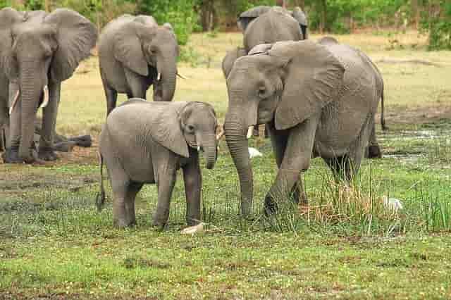 Fillerin En Akıllı Hayvan Olduğunun 5 Açıklaması