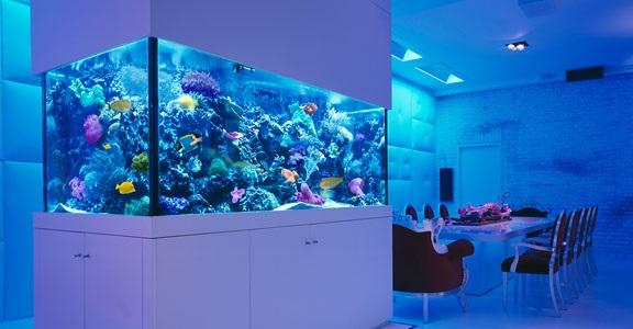 Merawat Aquarium Air Laut - Budidaya Ikan
