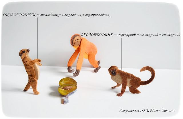 состав-околоплодника-пальчиковый-театр-сурикат-мартышка-орангутан-слива