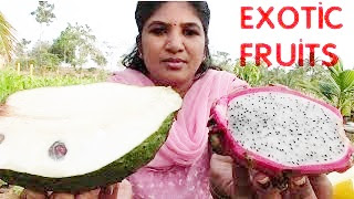 RARE AND EXOTIC FRUITS ONE MUST NEVER MISS TO EAT   HEALTHY FRUITS