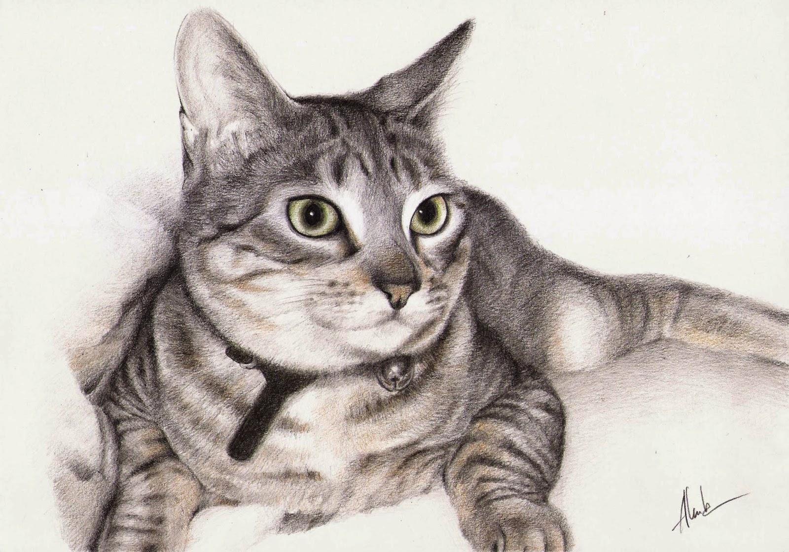 Dibujo realista de un gato