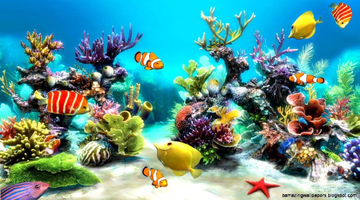 Real Aquarium Wallpaper | Amazing Wallpapers