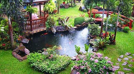 Membuat Taman Rumah Berkonsep Apotek Hidup