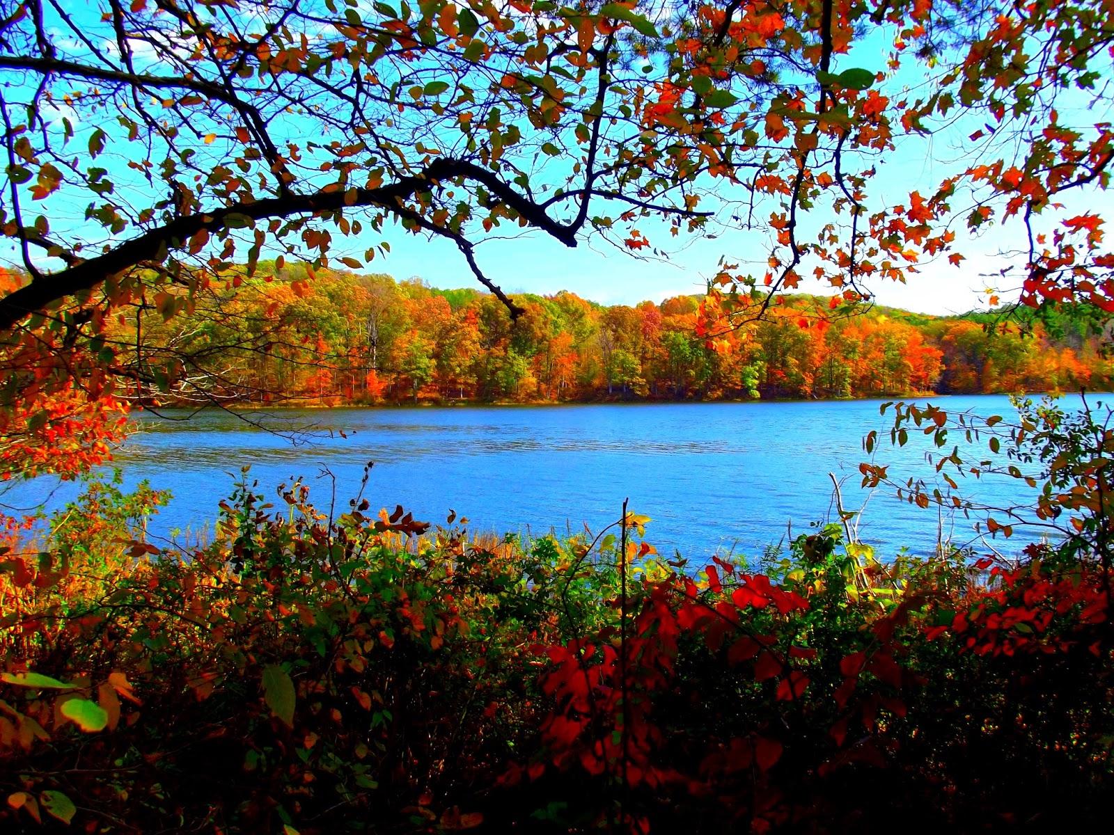 Yellowwood State Forest Nashville Indiana