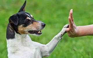 Does Your Dog Need Obedience Training?