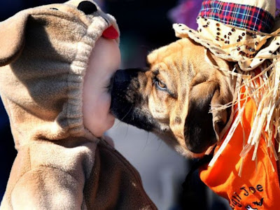 Dog Kissing Funny Standard Resolution HD Wallpaper