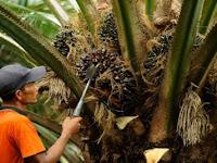 Lima Konglomerat Sawit 'Disuntik' Subsidi Mega Rp7,5 Triliun