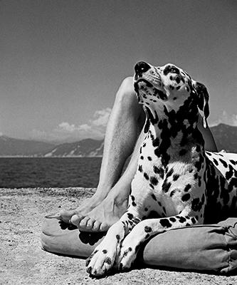 http://joeinct.tumblr.com/post/153862413292/joeinct-master-and-dog-photo-by-herbert-list