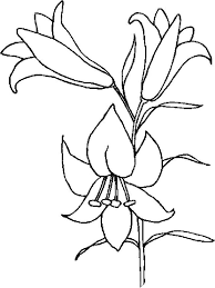 Lilies Coloring 4