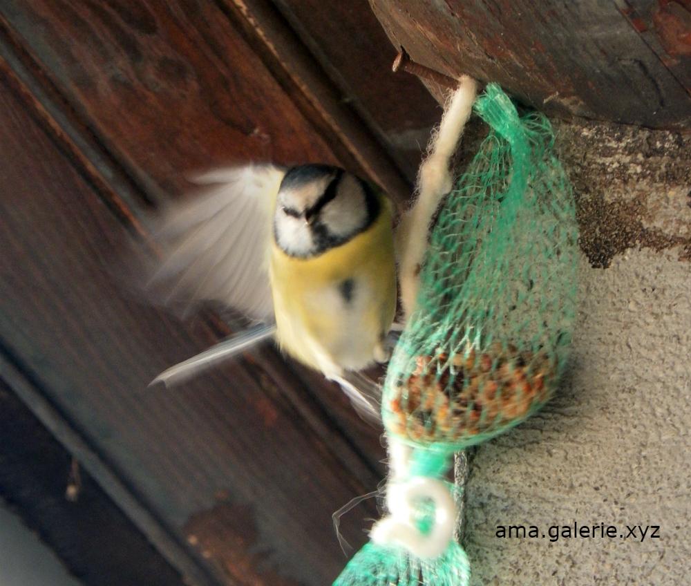 Drôles d'oiseaux par Ama artiste dans les Alpes de Haute-Provence