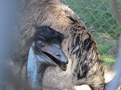 hector castro ariño -