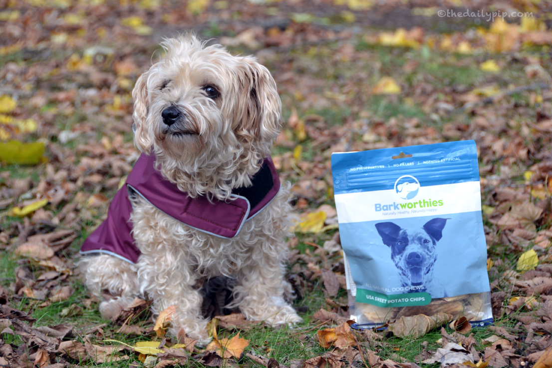 Ruby samples Barkworthies Sweet Potato Chips in the Holidays, Hounds, and Hot Buys Giveway