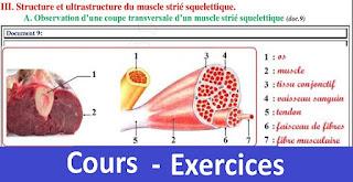 Le muscle se caractérise donc par son excitabilité et sa contractilité. la rhéobase (appelée aussi seuil d'excitation ou intensité liminaire) est l'intensité d'excitation minimale qui donne une réponse musculaire. les intensités inférieures à la rhéobase (intensités infraliminaires) sont inefficaces (elles ne provoquent pas de contraction musculaire), alors que les intensités supérieures à la rhéobase (intensités supraliminaires) sont inefficaces.