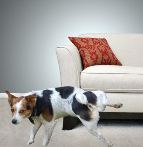 Pets N More 8 Top Tips To Selling Your Home With Pets