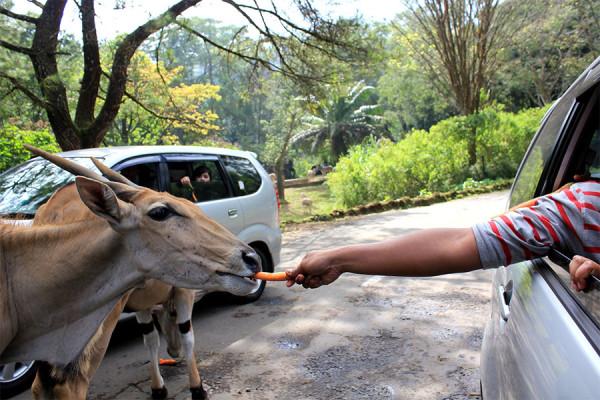 Taman Safari Indonesia di Cisarua Bogor