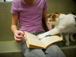 membaca fokus tinggi