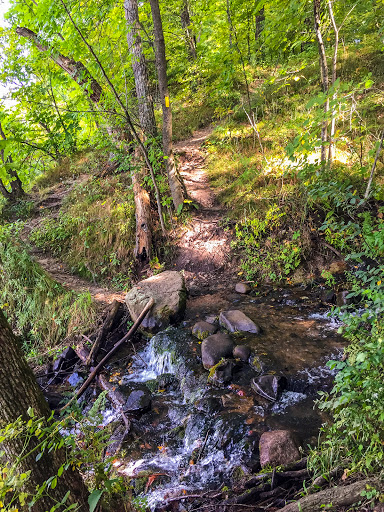 A rock hop across a stream on the St. Croix Falls Segment of the Ice Age Trail