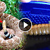 Father Decided To Open Up The Rattle Of A Rattlesnake, What They Found Out Was Shocking!