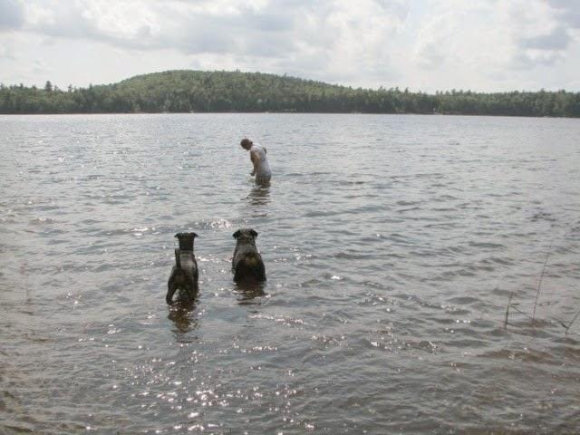 Bog Lake in Marshfield, Maine