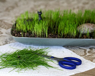 Lenten Grass, an old Finnish tradition ♥ KitchenParade.com, helping children mark the season of Lent.