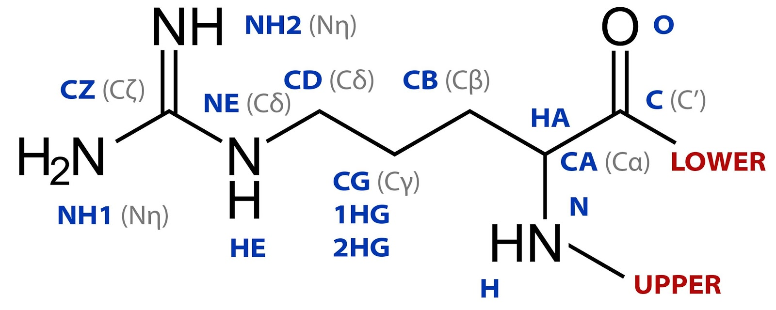 Everything you wanted to know about isopeptide bonds in