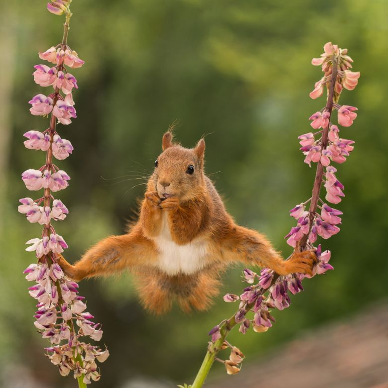 Squirrels Photography by Geert Weggen
