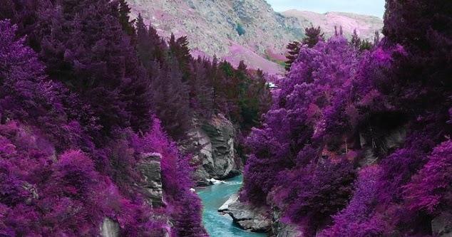 purple nature cult nu