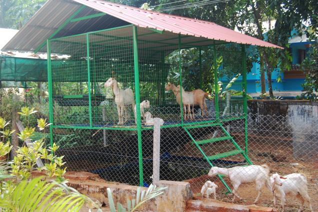 Tifany Blog How To Build Goat Shed