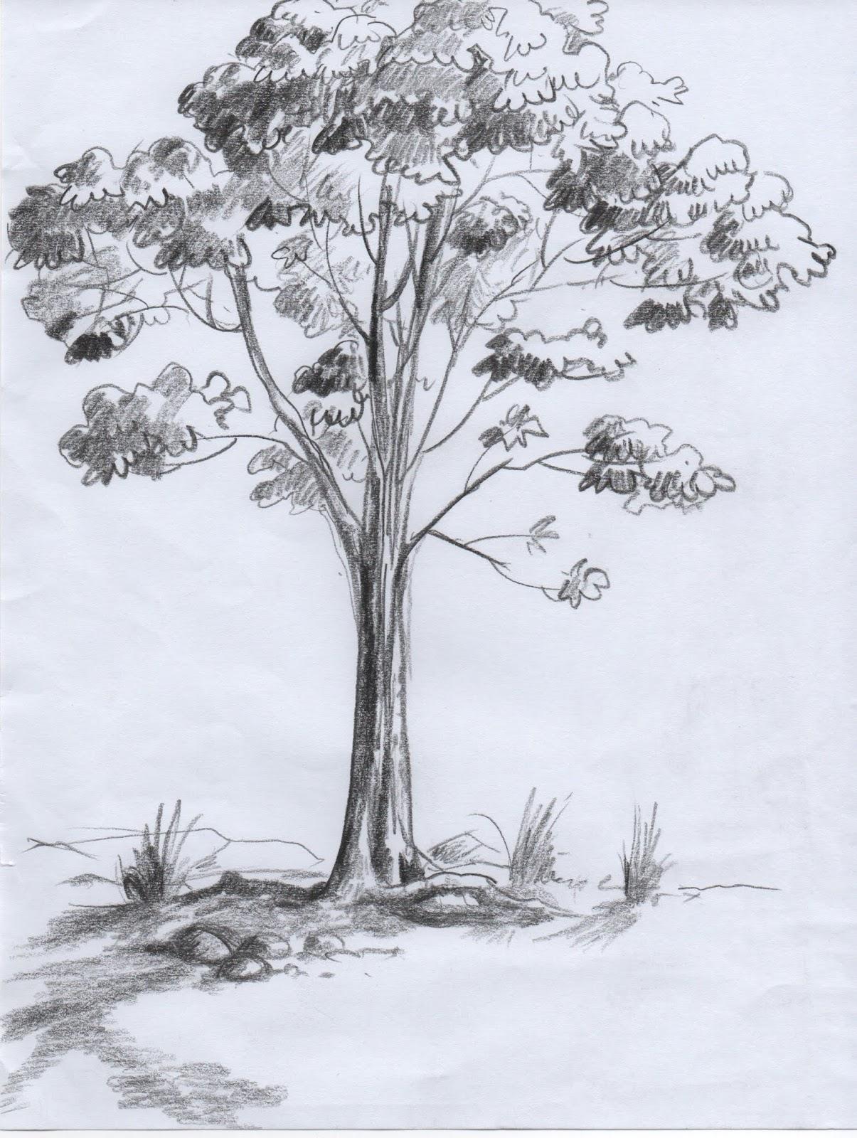 Oyee Ihiiir Cara Natural Menggambar Pohon