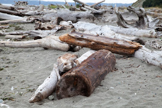 Driftwood on the beach in Whidbey Island, Washington State.