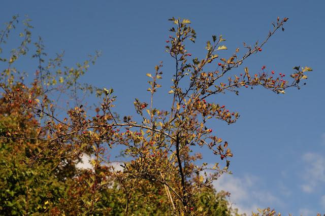 fall highlights in Norfolk