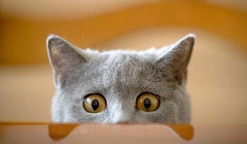 Kedi Heykelini Gören Kedilerin Ödleri Patladı